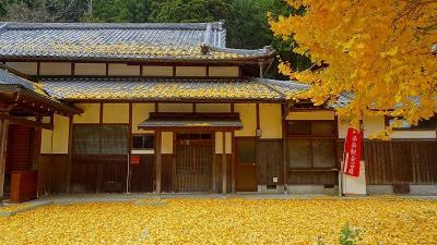 丹波篠山へ紅葉狩りに行きました(3) 弘誓寺(宇土観音)の黄葉。