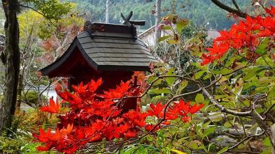 丹波篠山へ紅葉狩りに行きました(4) 大国寺の紅葉。
