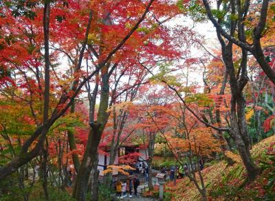 京都、嵯峨プチ紅葉狩り【常寂光寺、二尊院】
