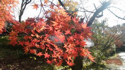 京都の紅葉の穴場をめぐる(1)吉田山から黒谷さん 泉涌寺