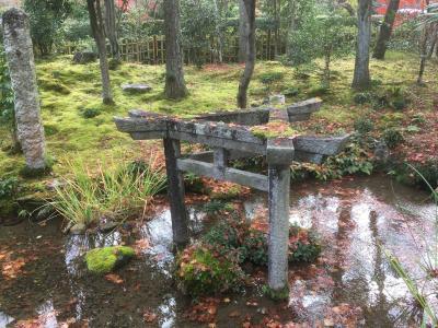 残紅葉求めささっと嵐山~南禅寺