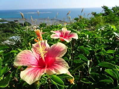 沖縄 セルラースタジアムでコンサートとバスツアーで島内観光 3日間《後半》