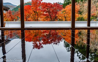 京都・瑠璃光院?!・・・ではなく、関東の床モミジ