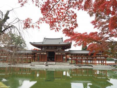 2019秋 関西の紅葉狩り:その3 京都宇治