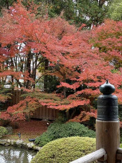 毎年恒例京都紅葉旅