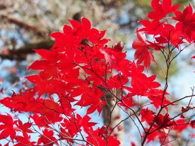 2019京都紅葉旅行(1)永観堂、南禅寺、哲学の道、銀閣寺、永観堂ライトアップ