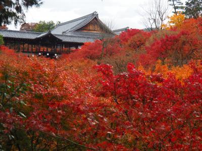 2019京都紅葉旅行(2)東福寺、光明院、平等院、二条城、京都国立近代美術館
