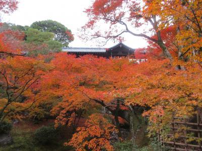 東福寺で紅葉狩り