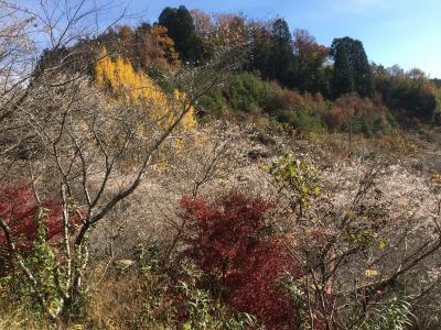 四季桜と紅葉を見に行くドライブ2019