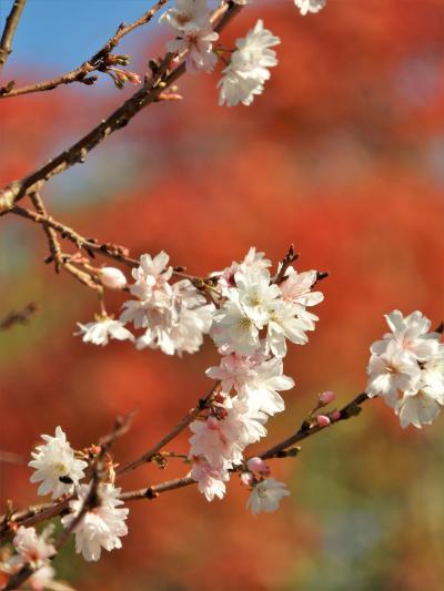鮮やかな紅葉が遊歩道を包み込む須磨離宮公園