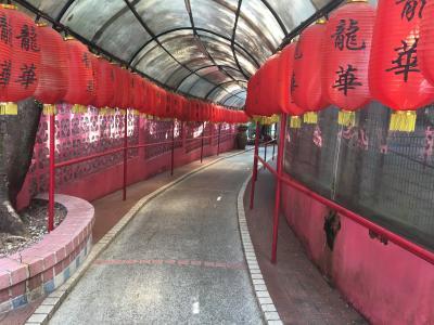 香港:龍華酒店【嫩鴿肥鶏】に鳩料理を食べに行く
