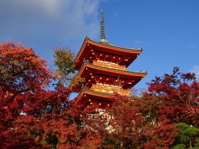 ひこの日帰り弾丸トラベラー。今回は紅葉見頃の京都へ行ってきました !!!