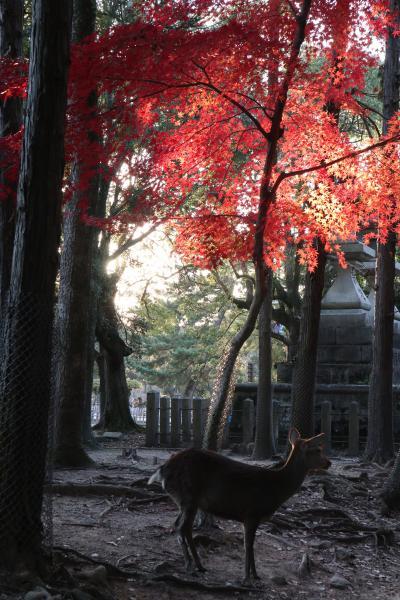 ひとり奈良旅