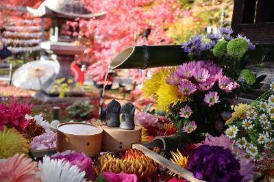 京都・さんぽ地図の旅 ⑨花爛漫の勝林寺~晩秋の今熊野観音寺