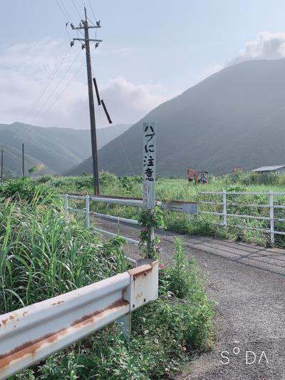 奄美大島♪ゆっくり読書でもするはず・・・・の旅②