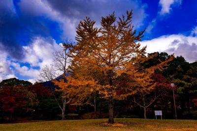 南立石公園の紅葉 2019