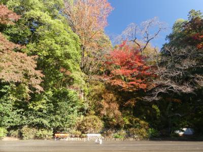 「唐沢山城跡」の紅葉_2019(1)_11月19日は、一部色づいているが、ほとんど(栃木県・佐野市)
