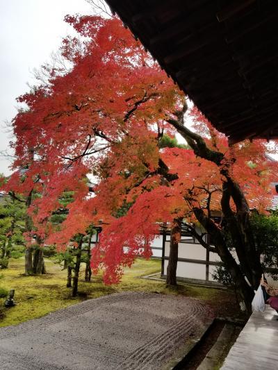 紅葉満喫! てくてく京都・奈良巡りpart1