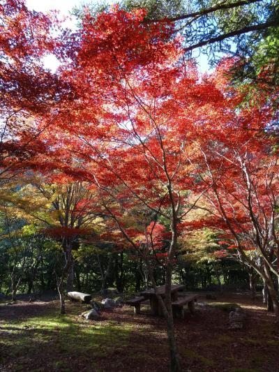 紅葉始まりかけの伊豆1泊2日旅(1)とうふ伊豆庵でランチして久しぶりに浄蓮の滝へ
