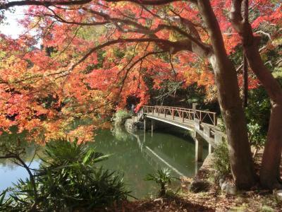 秦野 震生湖の紅葉 2019