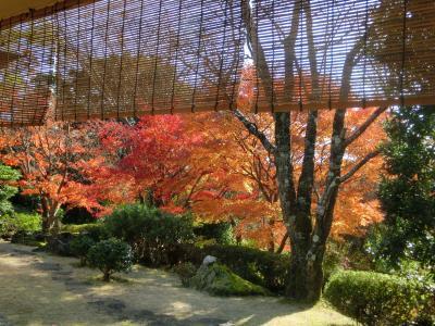 秦野戸川公園の紅葉 2019