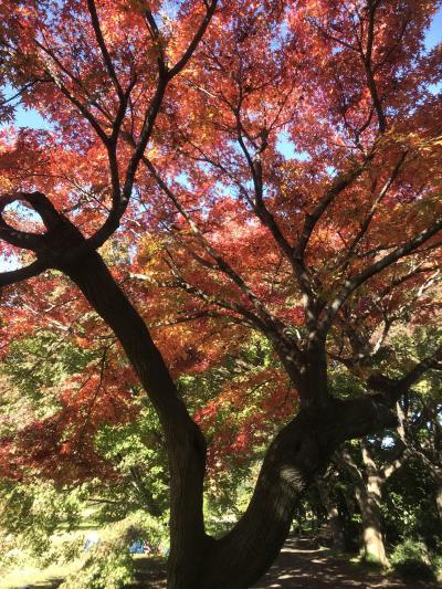 和歌のテーマパークから巨木のテーマパークへ紅葉狩り