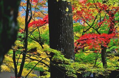 2019紅葉 ゆく秋を惜しみながら、秋色の金剛輪寺(11)