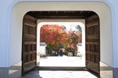 紅葉を目当てに歩いて巡る、1日 宇治観光;三室戸寺、宇治神社、興聖寺、平等院、辻利兵衛