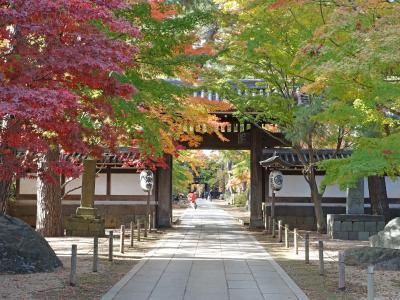紅葉の本土寺、東漸寺へ(千葉県松戸市)