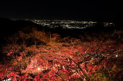 大山 紅葉登山で阿夫利神社はライトアップ