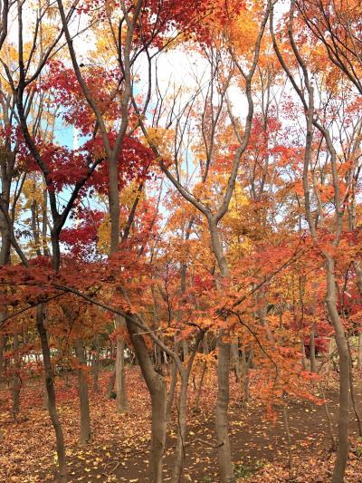 植木の町川口市安行の紅葉