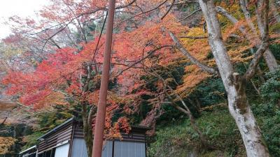 香嵐渓 12月紅葉