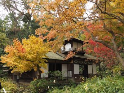 2019 横浜三渓園の紅葉、今年はどうかな?