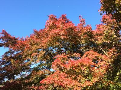 秋を求めて☆修善寺へ