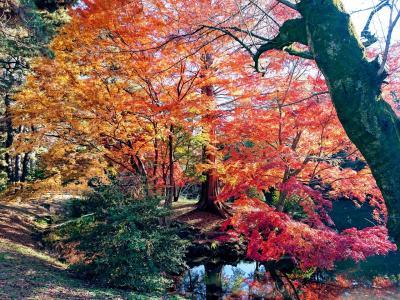 晩秋の新宿御苑の紅葉