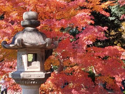 六義園の紅葉 まだまだ楽しめます