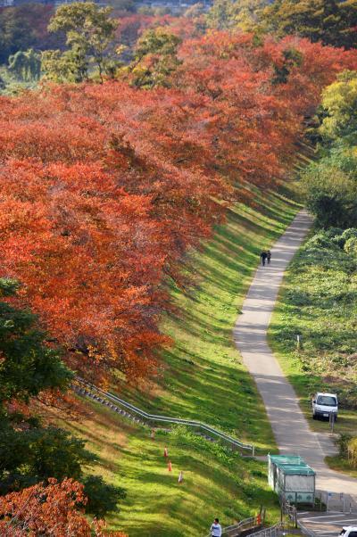 2019秋の紅葉散策③~京都八幡・背割堤桜並木