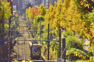 都電荒川線(東京さくらトラム)沿線に綺麗に色付くイチョウ並木を見に訪れてみた