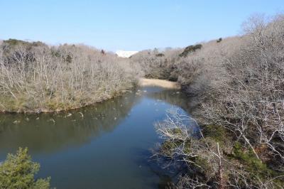 水郷県民の森でバードウォッチング [2018](2) (後編)