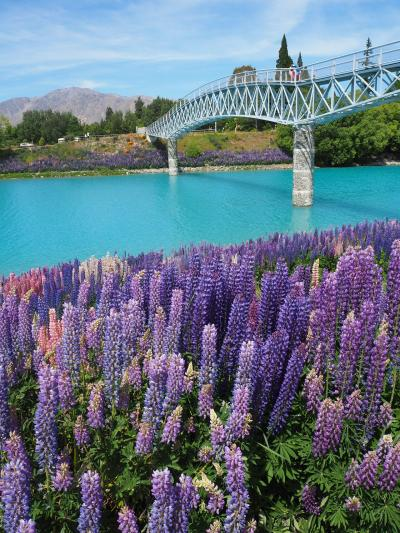 ニュージーランド南島②テカポ編