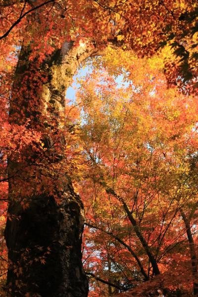 三井ガーデンホテル新町別邸に泊る5日間♪ 暮らすように旅をした晩秋の京都♪ 1日目北野天満宮
