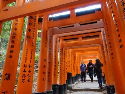 2019 東本願寺&伏見稲荷 埋め尽くす外国人「ここ日本?」と疑いたくなる京都