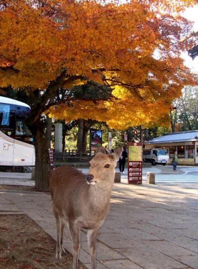 奈良の紅葉・黄葉 ! 奈良公園