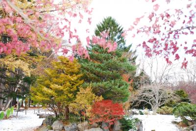 豊平公園の冬景色