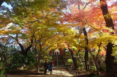 本土寺の紅葉 2019
