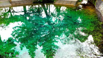 美祢市の名水百選に選定されている「別府弁天池」のエメラルドグリーンを見に行こう・・・