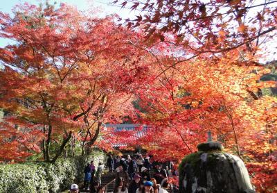 2019秋 紅葉の永観堂と京都市動物園
