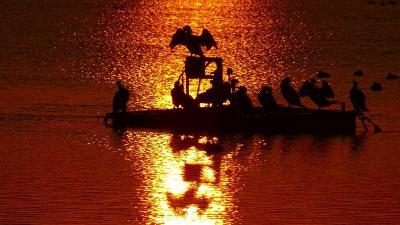 早朝散歩 久しぶりの瑞ヶ池の日の出 下巻。