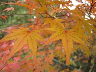 地味に紅葉を狩り込む