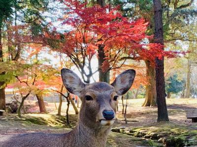 2019 11 週末 晩秋の京都&奈良